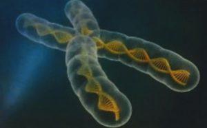 Oncología de Precisión: ¿de la Célula a los Genes?